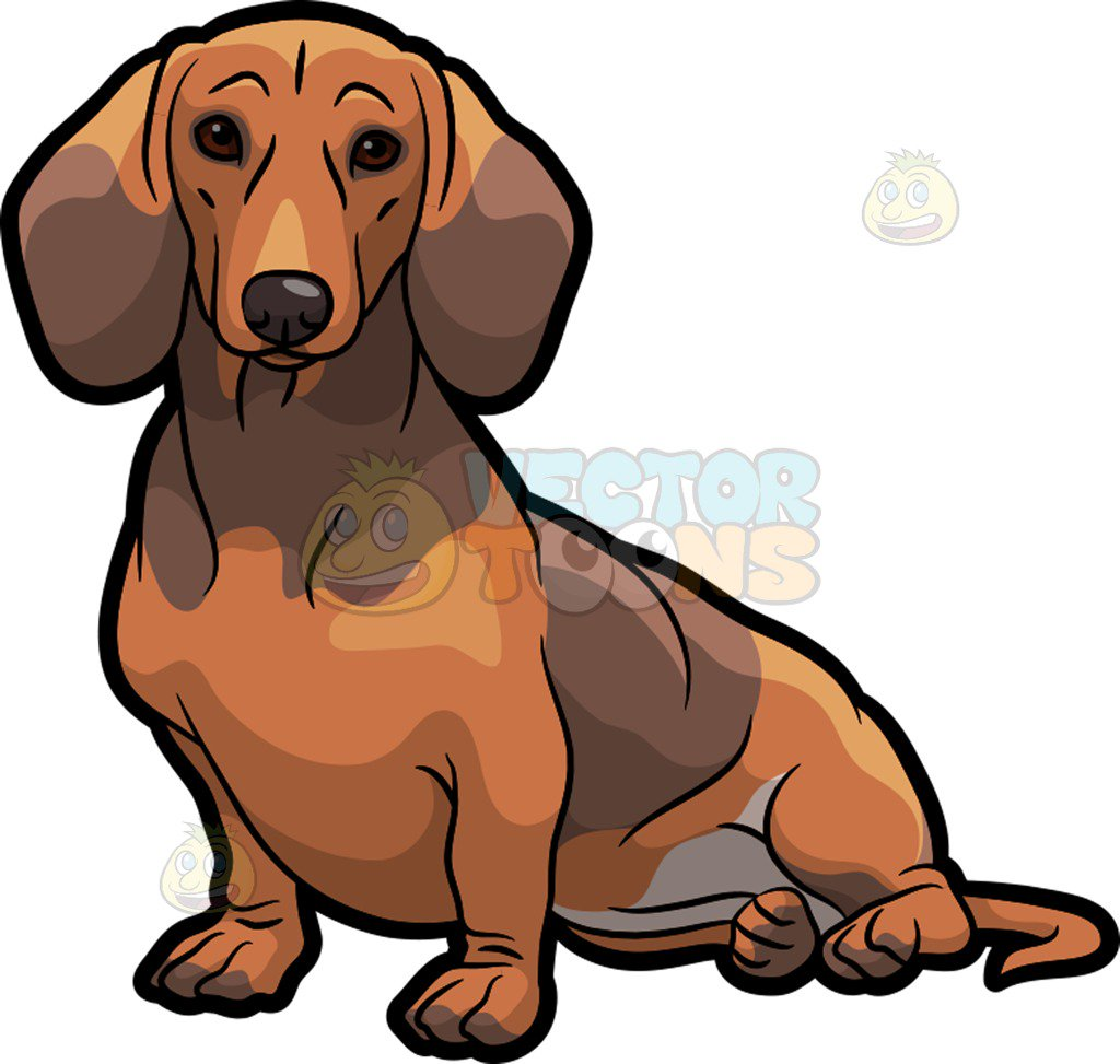 1024x973 An Adorable Dachshund Dog Sitting Down Clipart By Vector Toons