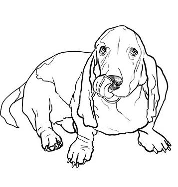 357x376 Free Basset Hound Dog Sitting And Stick Out Its Tongue Vector Free