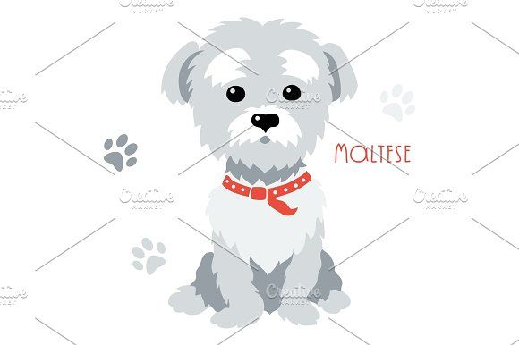 580x386 Vector Sketch Funny Maltese Dog Sitting