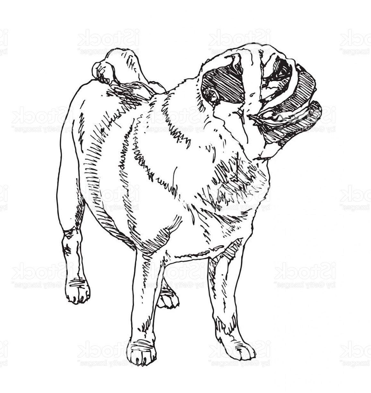 1156x1228 Pug Dutch Mastiff Dog Vector Gm Shopatcloth
