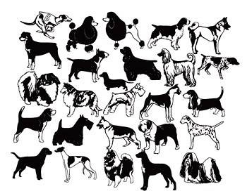 350x279 Vector Of Dog Of Black And White Dog Vector Biology Free