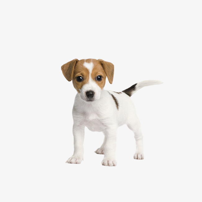 650x651 Dog Vector, Dog, Puppy, White Dog Png And Psd File For Free Download