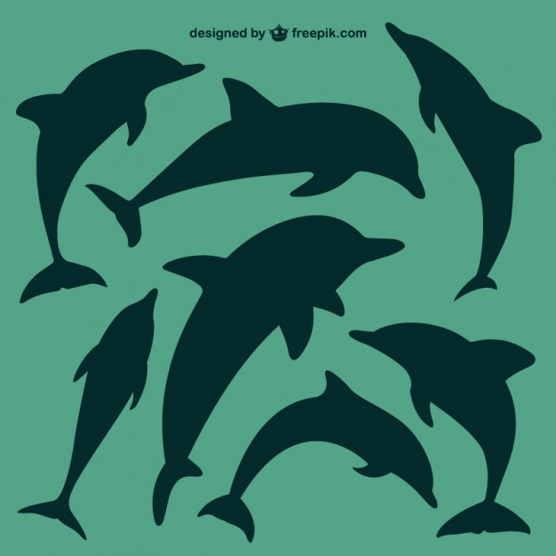 626x626 Dolphin Vectors, Photos And Psd Files Free Download