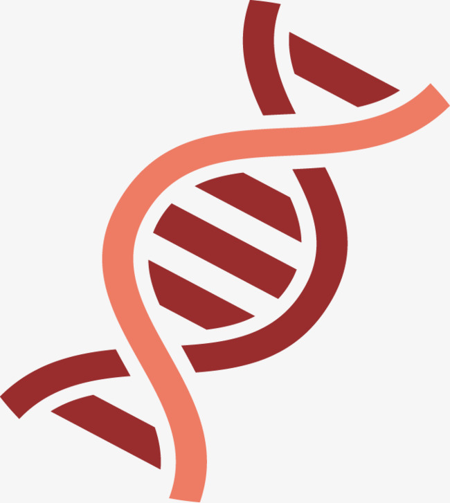 650x727 Dna Double Helix, Biological, Double Helix, Dna Png And Vector For