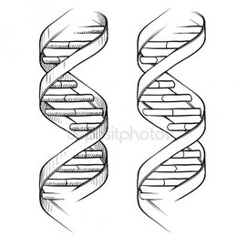 260x260 Download Dna Double Helix Vector Clipart Nucleic Acid Double Helix Dna