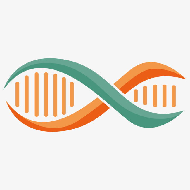 650x651 Simple Dna Double Helix Design, Simple, Dna, Vector Png And Vector
