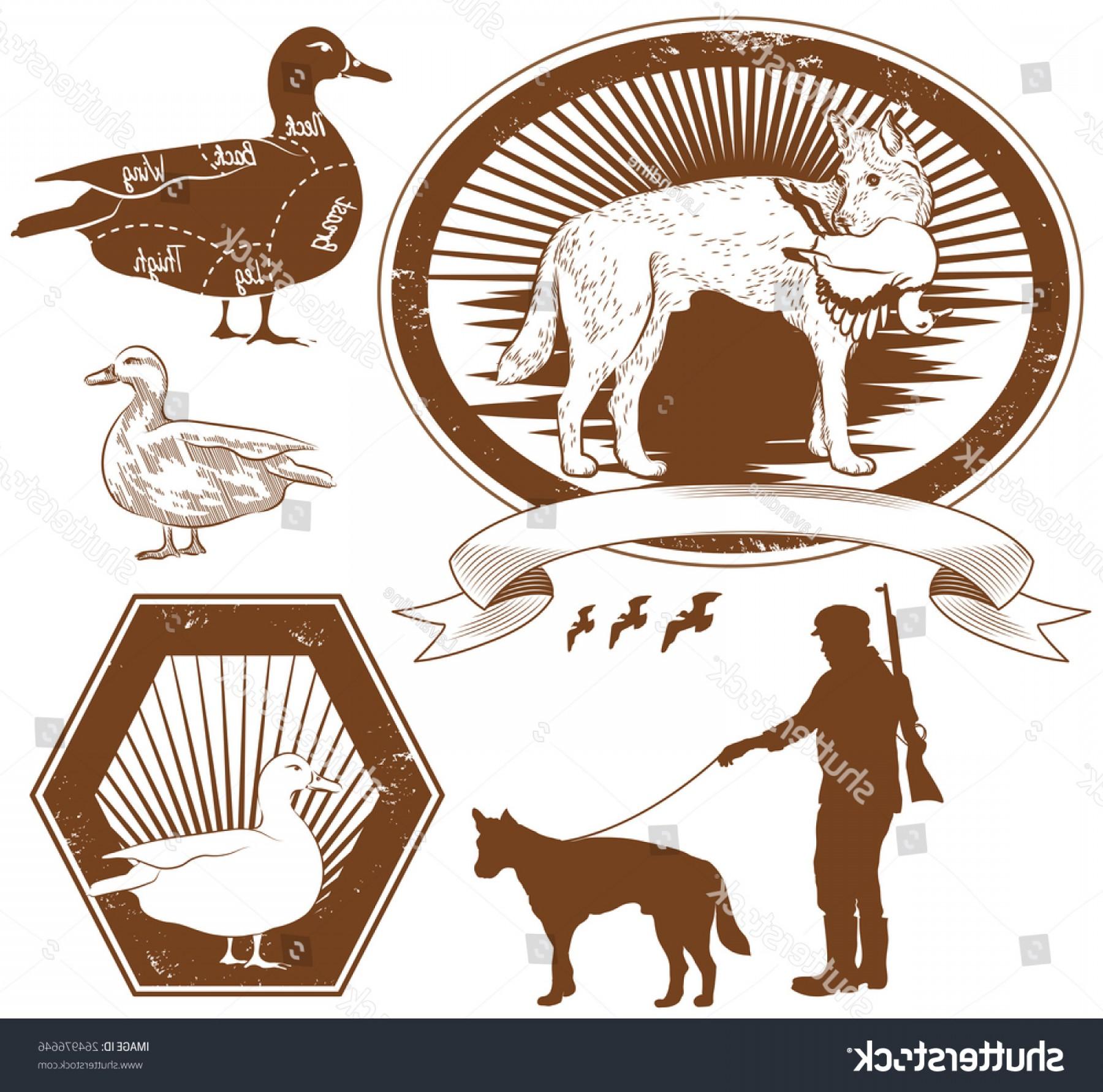 1800x1782 Set Duck Hunting Vector Illustration Lazttweet