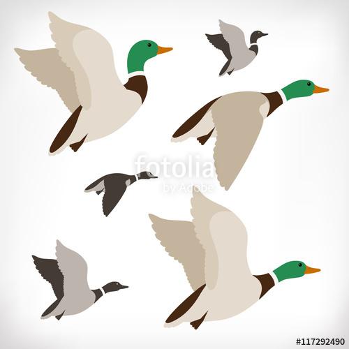 500x500 Set Of Flying Wild Ducks. Duck Hunting. Mallard Duck Flying. Flock