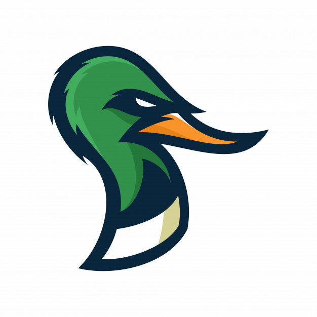 626x626 Duck