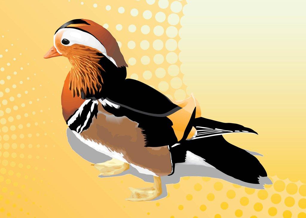 1024x730 Mandarin Duck Vector Vector Art Amp Graphics