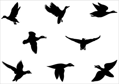 501x352 Duck Clipart Silhouette Cute Borders, Vectors, Animated, Black And