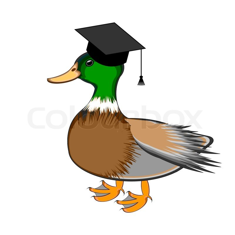 800x800 A Funny Duck In A Graduation Cap. Vector Art Illustration Isolated