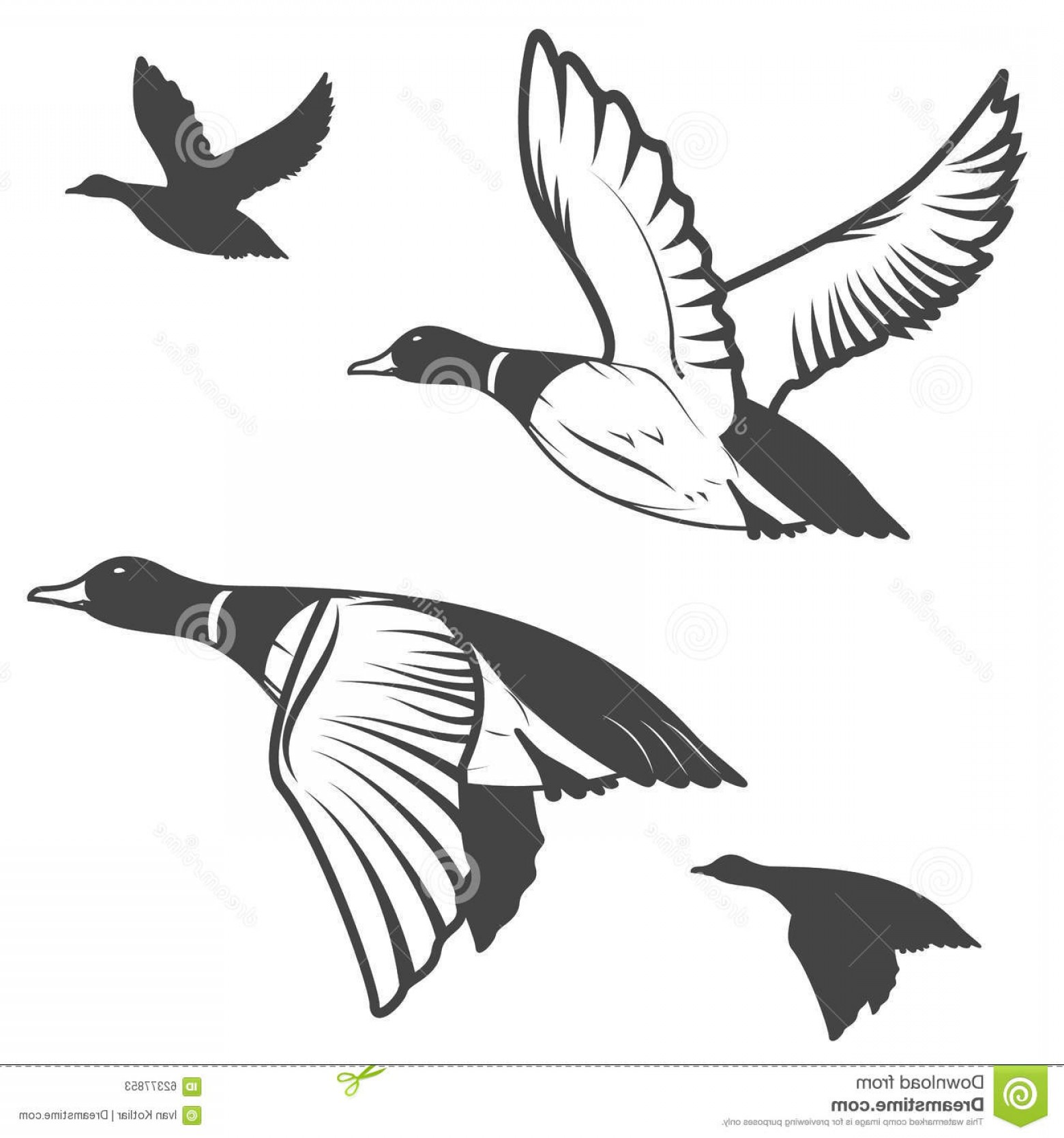 1560x1668 Stock Illustration Wild Duck Set Flying Ducks Hunting Mallard