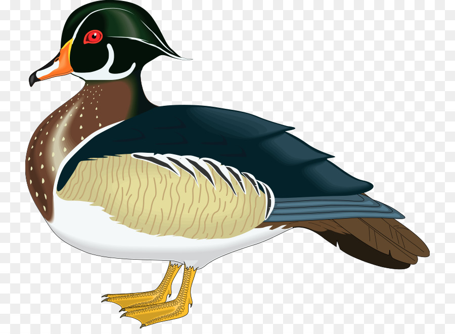 900x660 Wood Duck Mandarin Duck Mallard Clip Art
