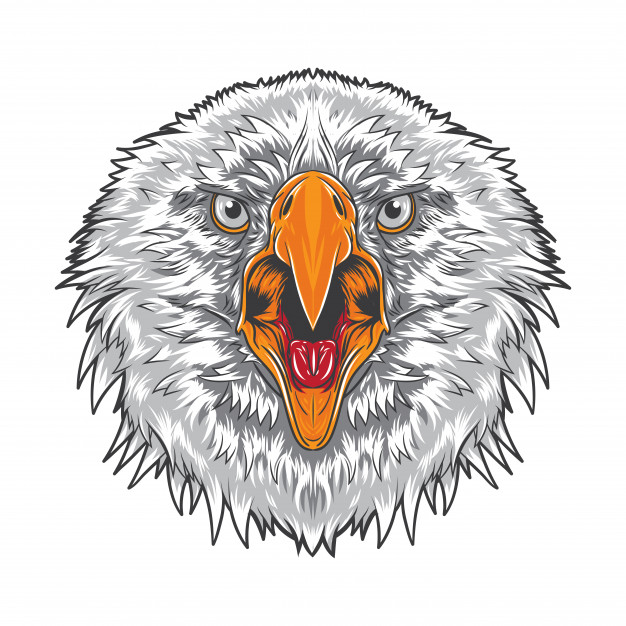 626x626 Angry Eagle Face Vector Premium Download