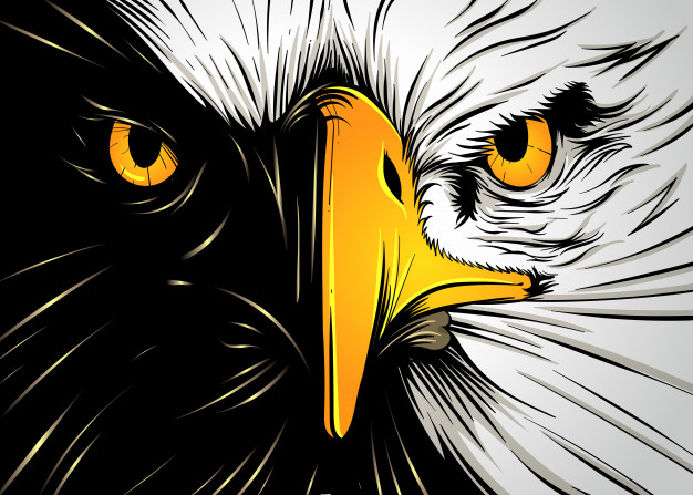 626x447 Powerful Eagle Face Vector Premium Download