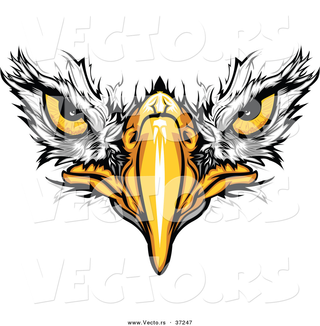 1024x1044 Cartoon Vector Of Bald Eagle Face With Fearless Eyes Intensely