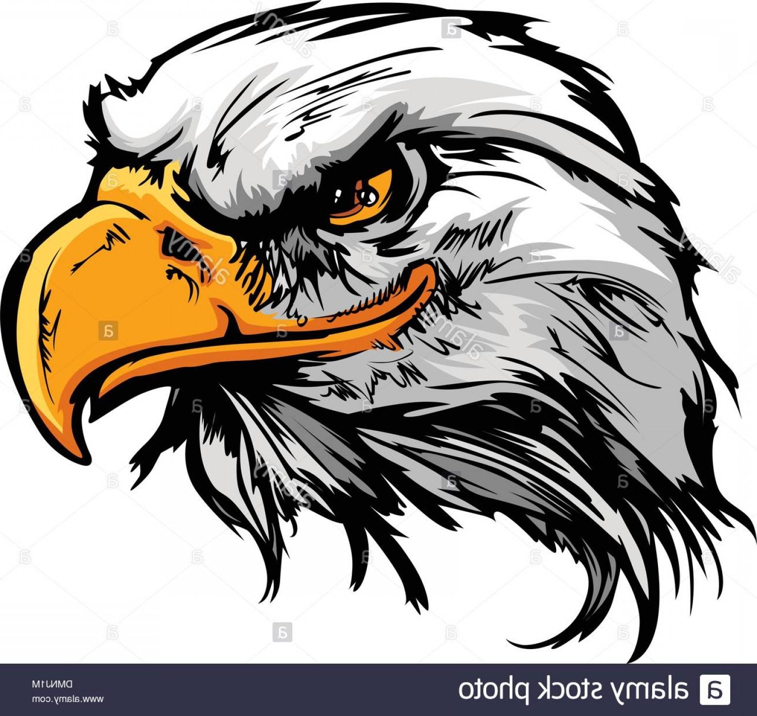 1560x1476 Eagle Mascot Vector Clip Art Arenawp