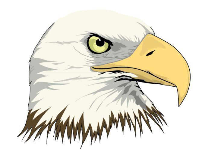 680x500 Bald Eagle Vector