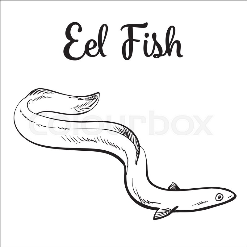 800x800 Live Eel Fish, Sketch Style Vector Illustration Isolated On White