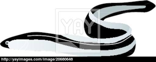 512x206 Vector Eel Vector