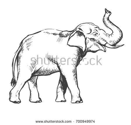 450x429 Drawn Asian Elephant Face