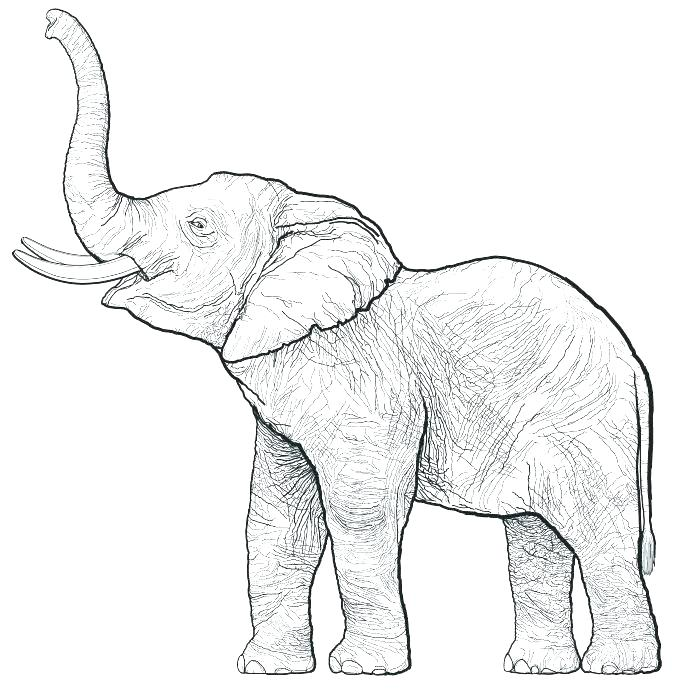 680x690 Outline Elephant Outline Elephant Image Free Coloring Pages