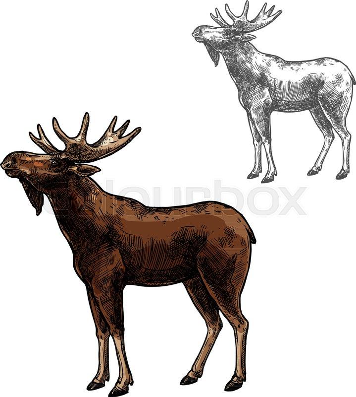 719x800 Elk Wild Animal Sketch Vector Icon Side View. Wild Mammal Elk Or