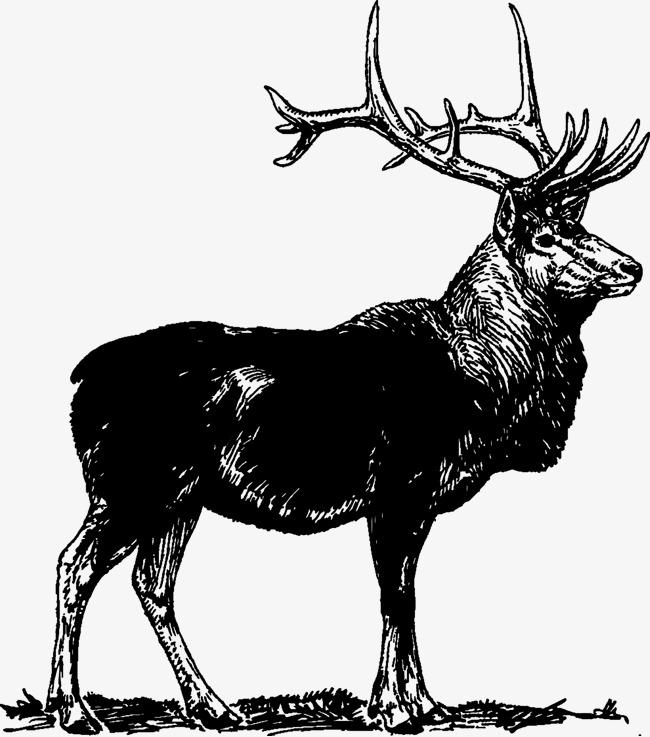 650x737 Black Elk Vector Material Hand Painted Animal, Animal, Elk, Animal