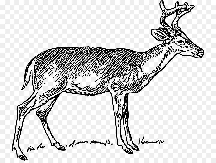 900x680 White Tailed Deer Clip Art