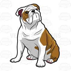 236x236 English Bulldog Animals English Bulldogs, Pet