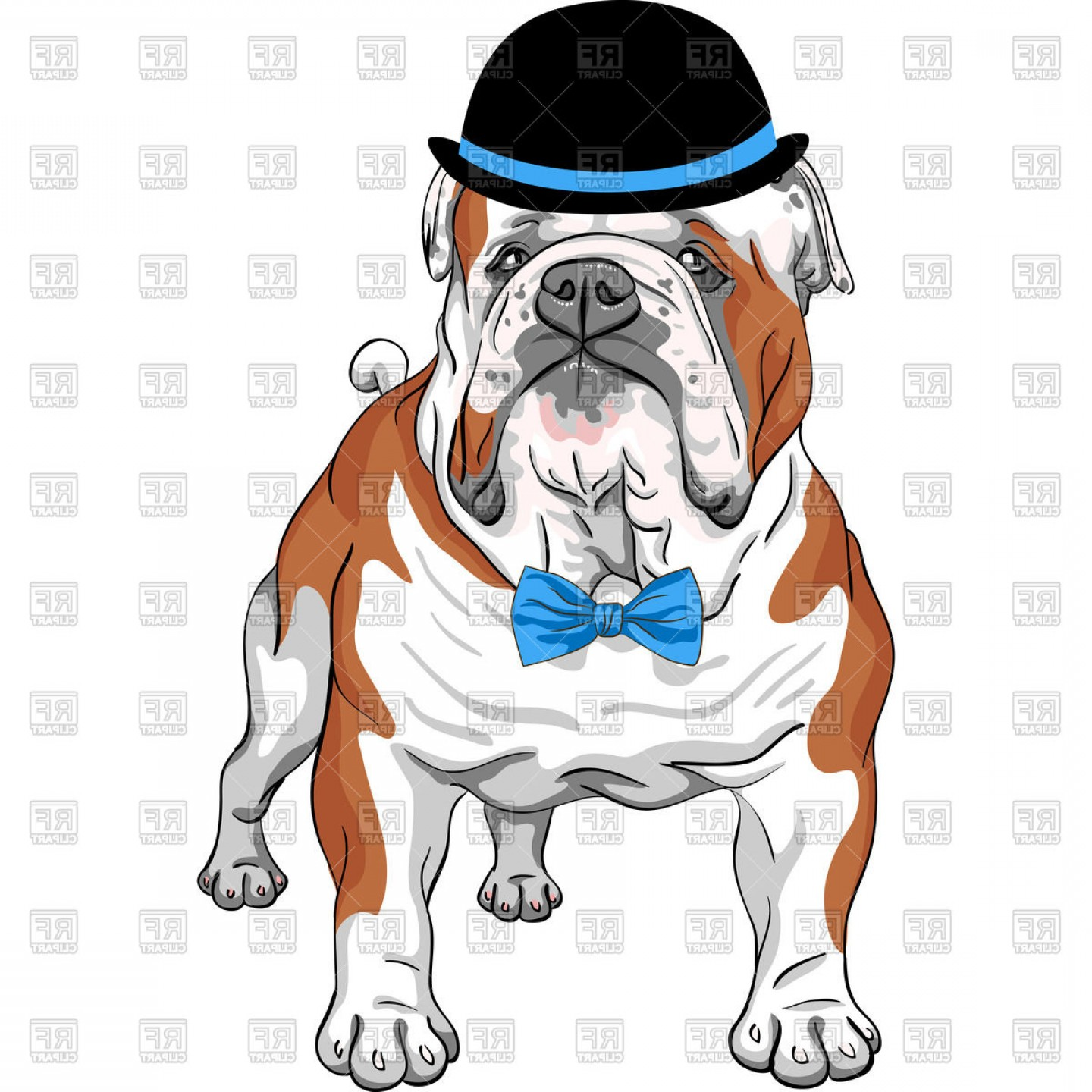 1440x1440 English Bulldog Breed In Hat And Bow Tie Vector Clipart Shopatcloth