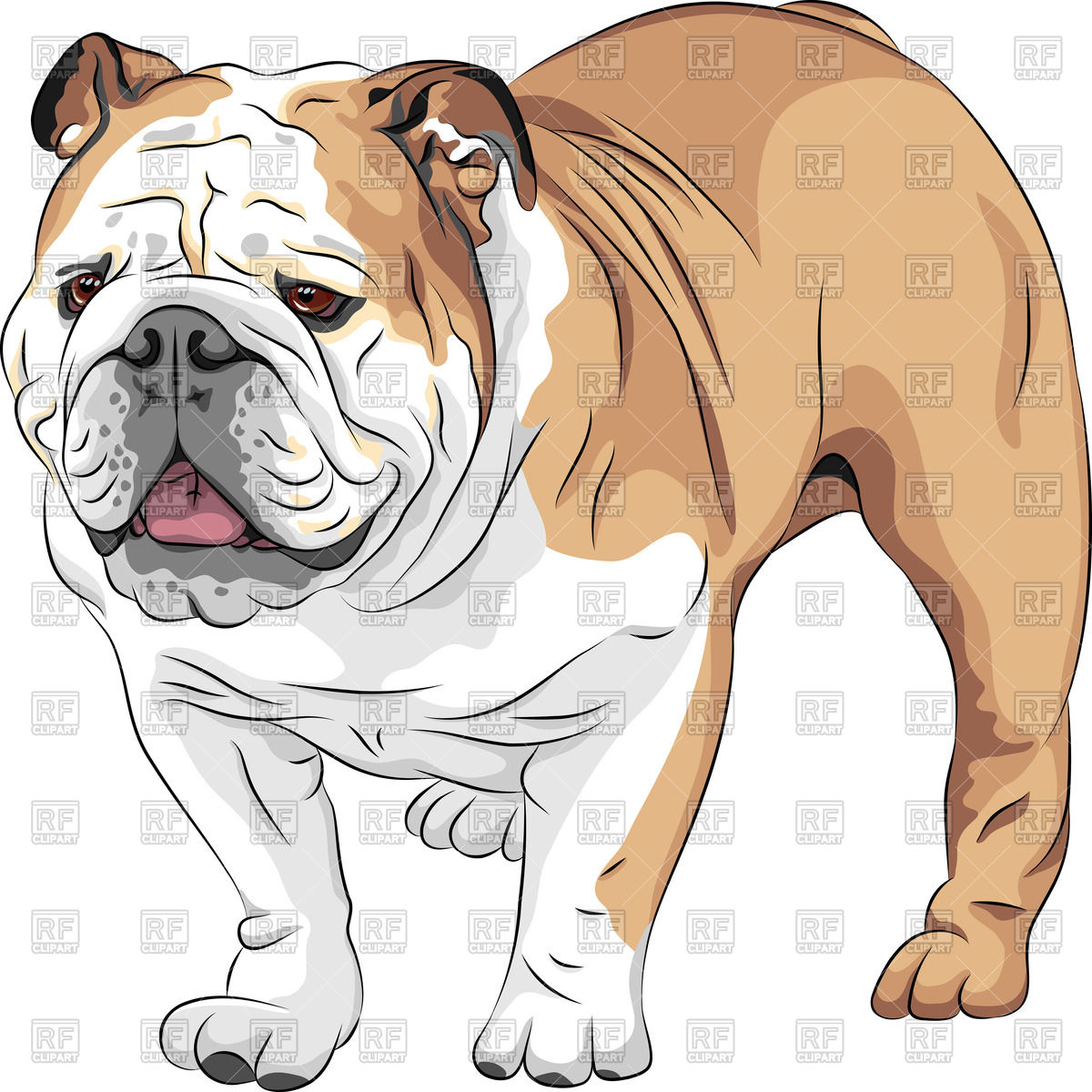 1200x1200 English Bulldog Vector Image Vector Artwork Of Plants And