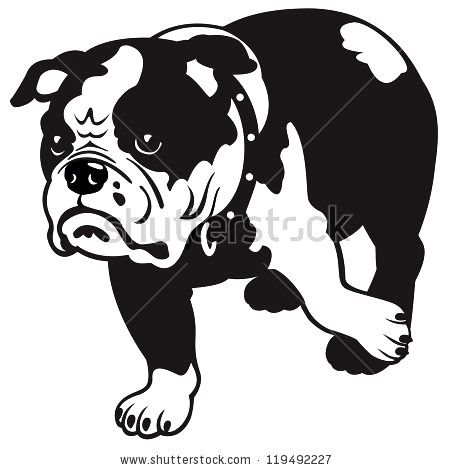 450x470 English Bulldog Vector Photo