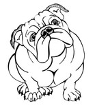 139x160 English Bulldog, Vector Illustration Stock Image And Royalty Free