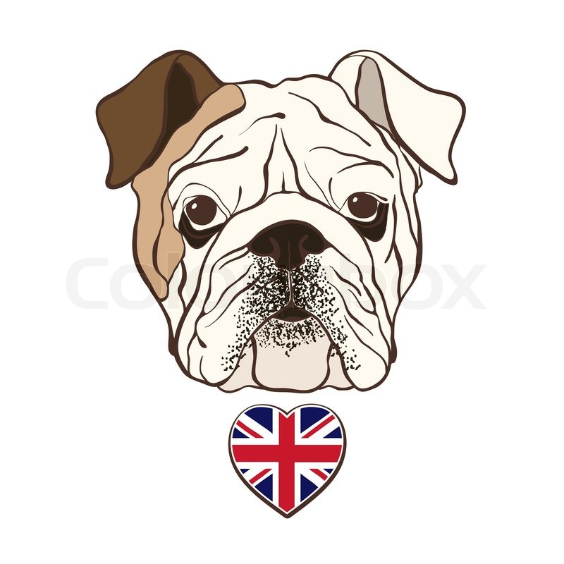 800x800 English Bulldog Face With Heart Flag Uk. Hand Drawn Vector