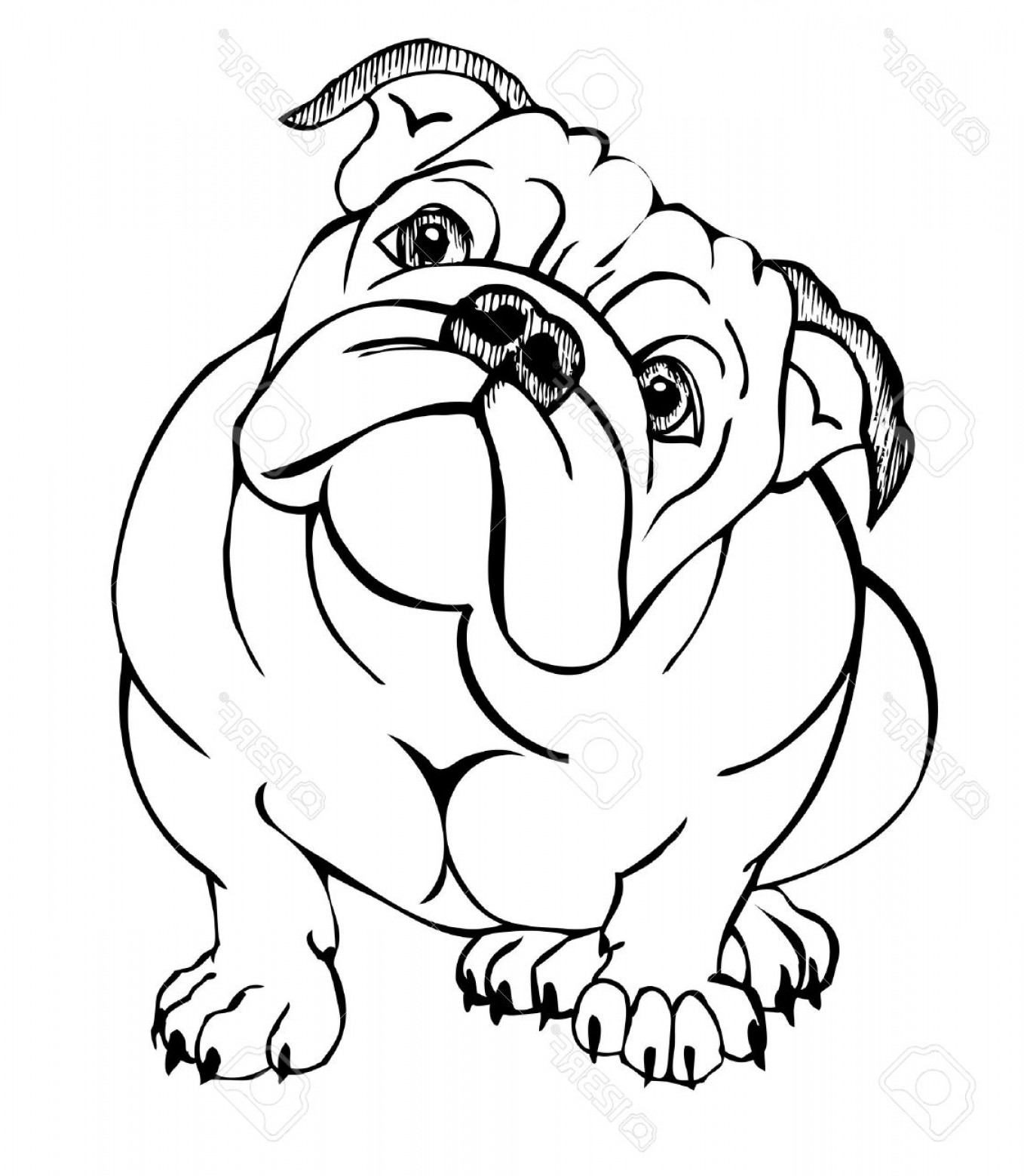 1358x1560 Photostock Vector English Bulldog Vector Illustration Rongholland