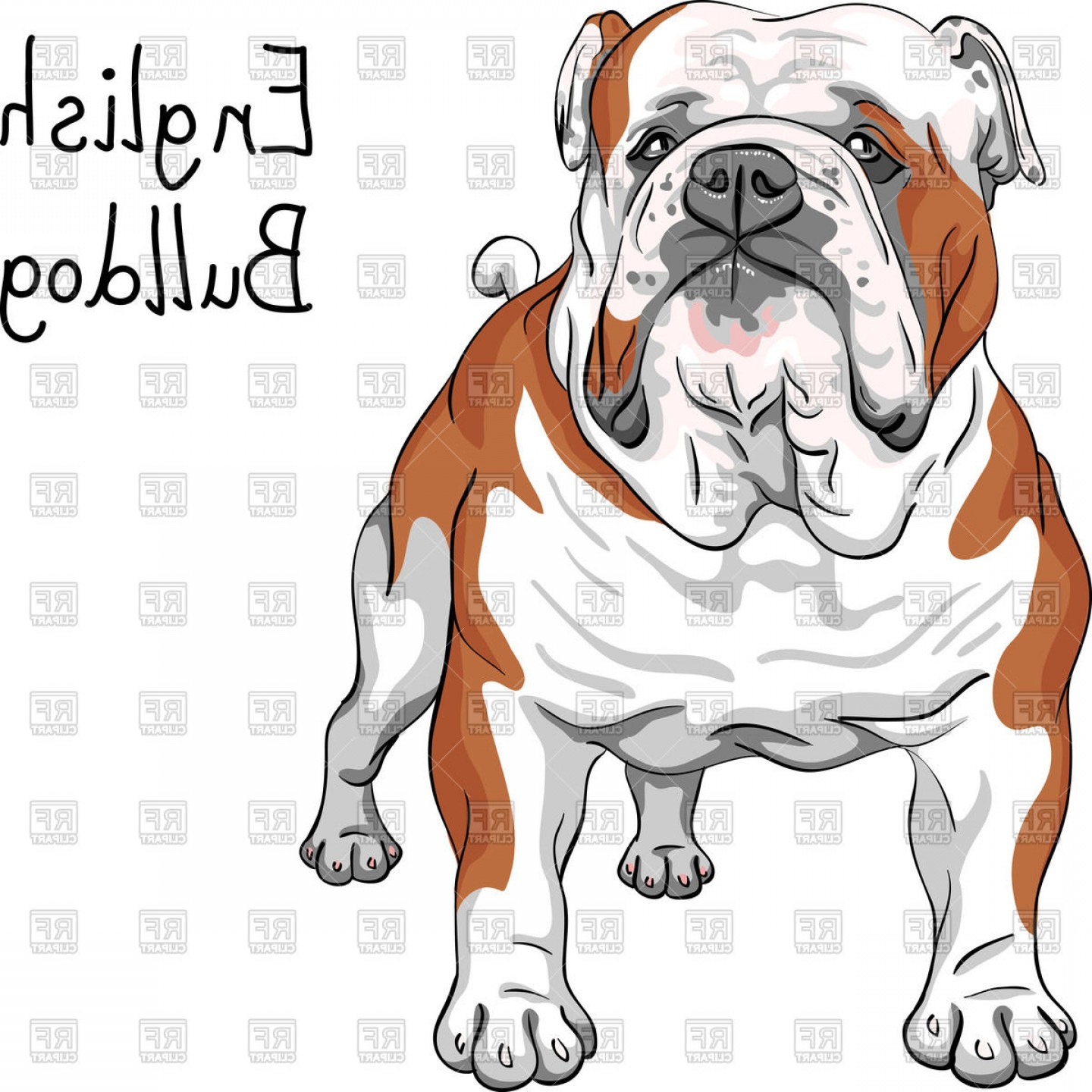 1440x1440 Sketch Of English Bulldog Breed Vector Clipart Shopatcloth