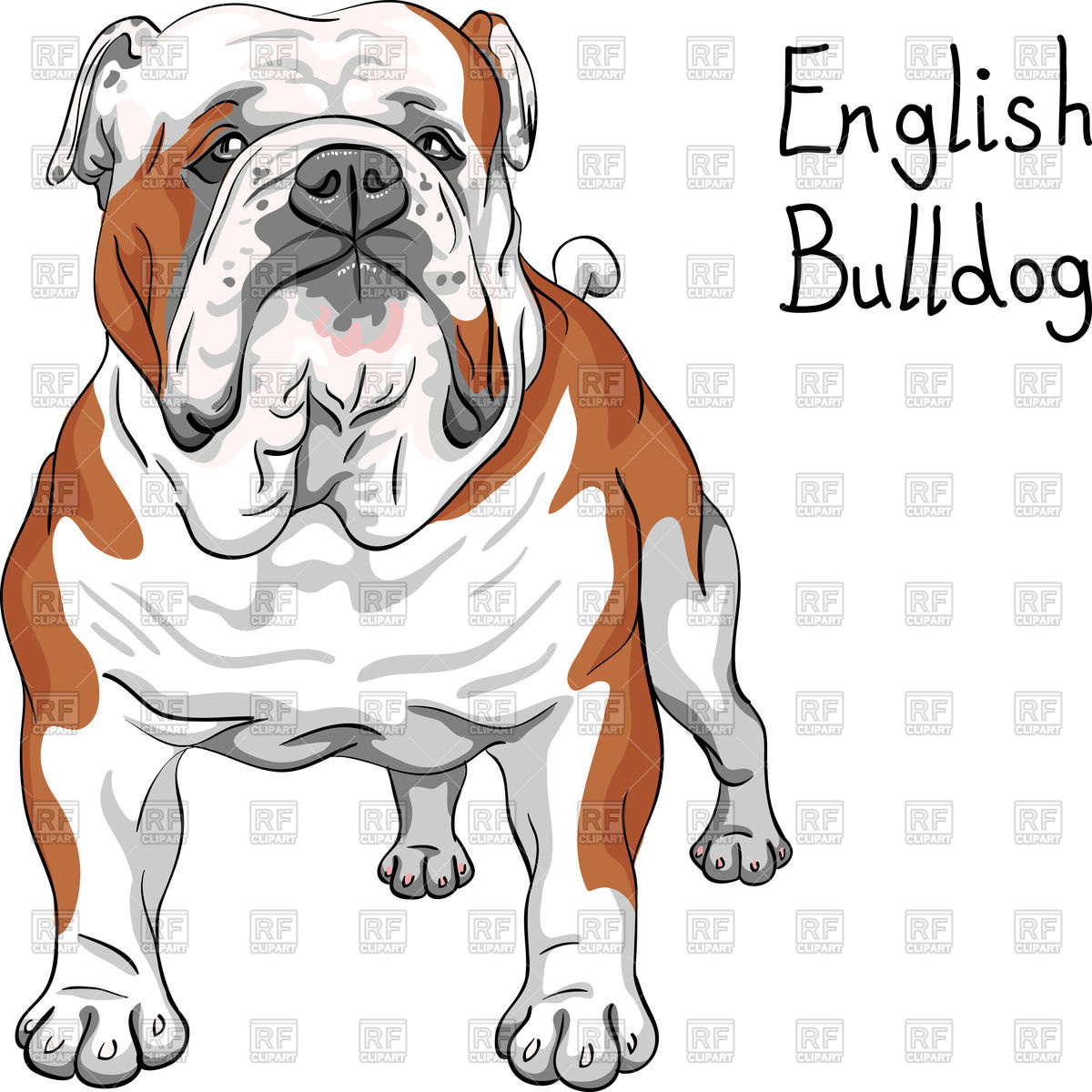 1200x1200 Sketch Of English Bulldog Breed Vector Image Vector Artwork Of