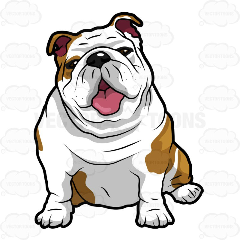 800x800 Wrinkly English Bulldog Sitting With Its Mouth Open Clipart By