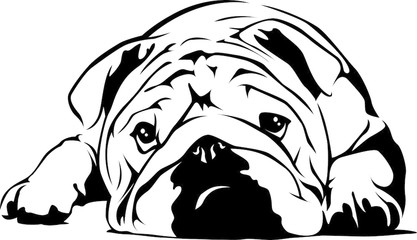 417x240 Bulldog Photos, Royalty Free Images, Graphics, Vectors Amp Videos