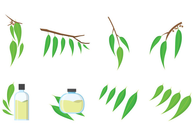 632x443 Free Eucalyptus Vector Free Vector Download 385359 Cannypic