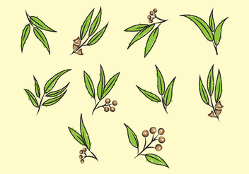 352x247 Set Of Eucalyptus Vector Free Vector Download 369737 Cannypic