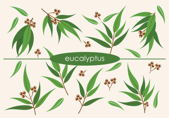 700x490 Vector Eucalyptus