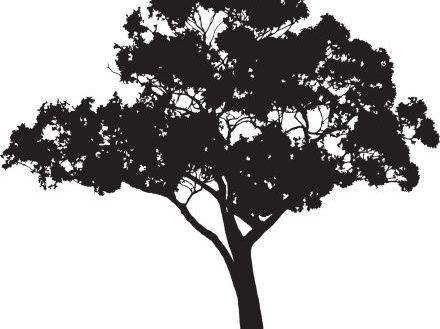 440x329 Valuable Design Ideas Gum Tree Silhouette Eucalyptus Vector Art