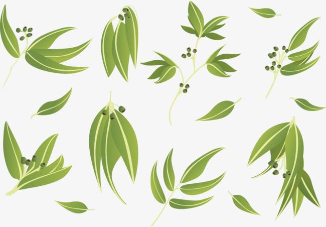 650x452 Vector Eucalyptus Leaves Doing Cutout, Eucalyptus, Leaves, Vector