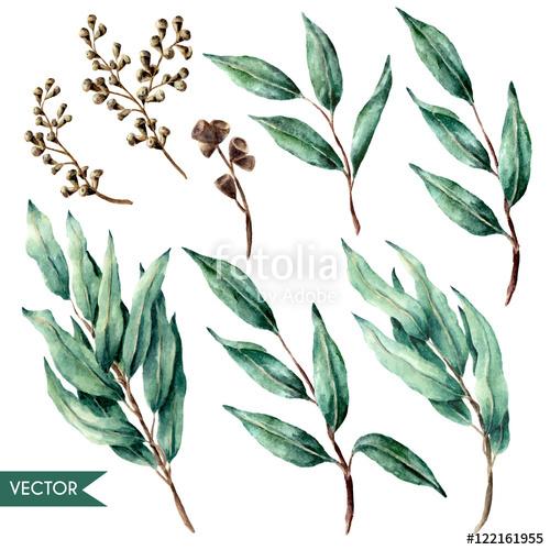 500x500 Vector Hand Drawn Watercolor Eucalyptus Leaves And Berries Set
