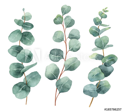 500x455 Watercolor Hand Painted Vector Set With Eucalyptus Leaves And