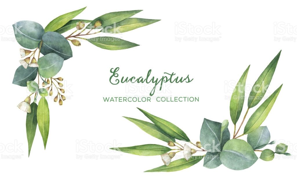 1024x614 Watercolor Hand Painted Wreath With Green Eucalyptus Leaves And
