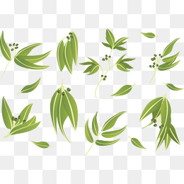 260x260 Eucalyptus Leaves Vector Png, Vectors, Psd, And Clipart For Free